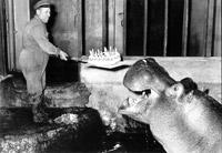 hippo bathday
